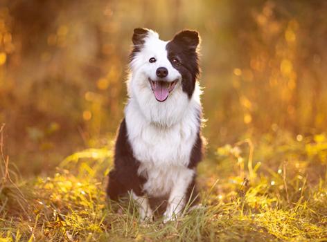 Kép egy kutyáról.